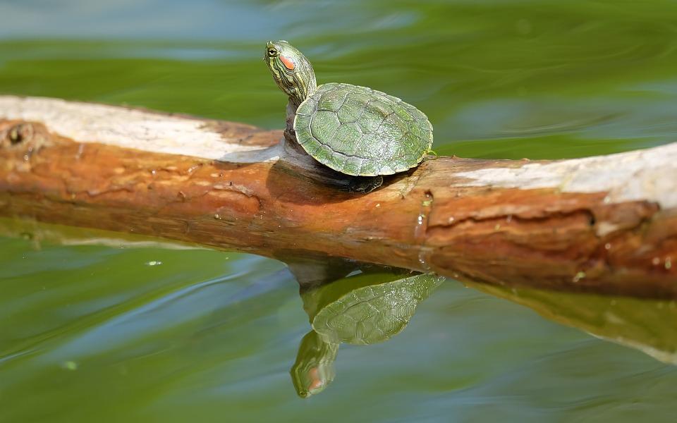 tortues d'eau conseils pratiques