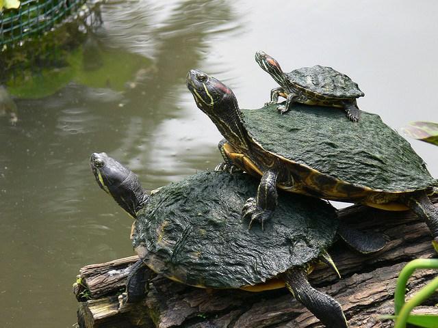 acheter des tortues