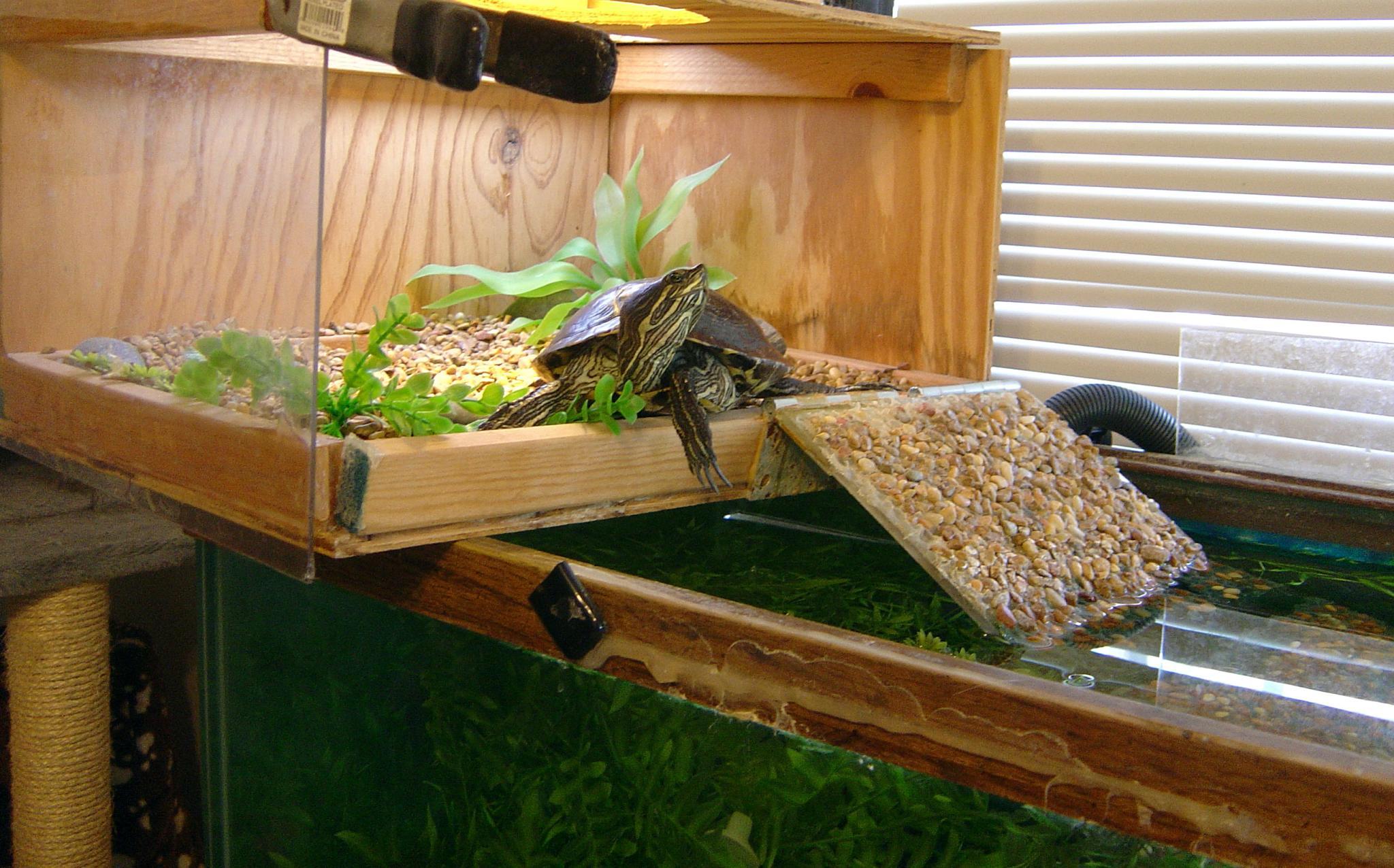 Une tortue sur son île