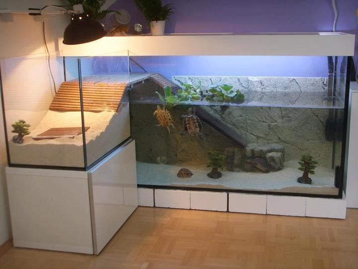 la résidence de la tortue: un paludarium