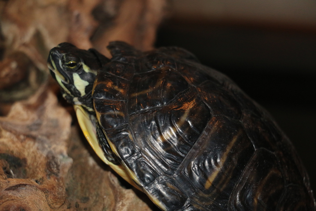 L'interaction avec votre tortue d'eau